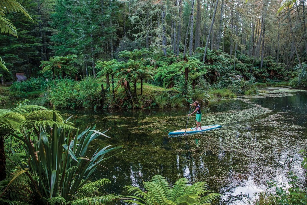 Stand up Paddling Urwald
